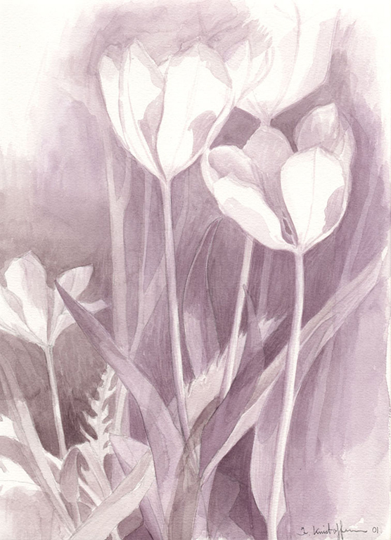 Tulip watercolour 2001 23x30,5cm