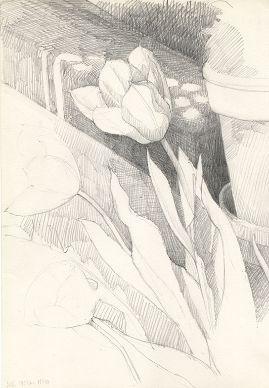 1 Study of tulips Pencil drawing 21X28 cm. 2003. jpg