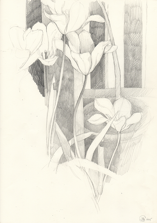 2-Study of tulips. Pencil drawing 42x30cm 2003 2005