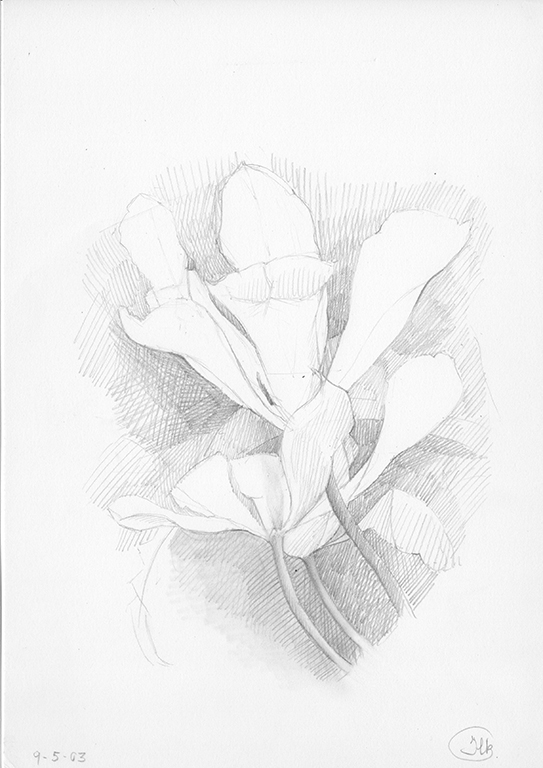 4 Study of tulips. Pencil drawing 21x28cm 2003