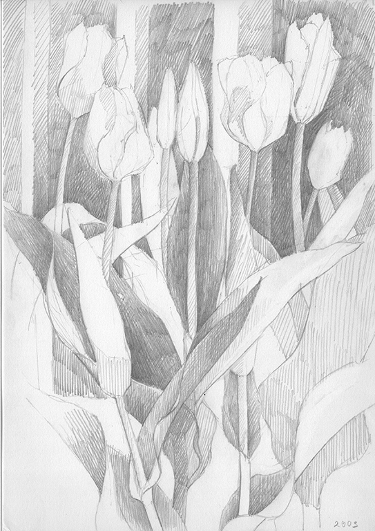 5 Study of tulips Pencil drawing 21x28cm 2003